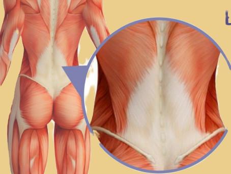 Mystérieux fascias et douleurs lombaires