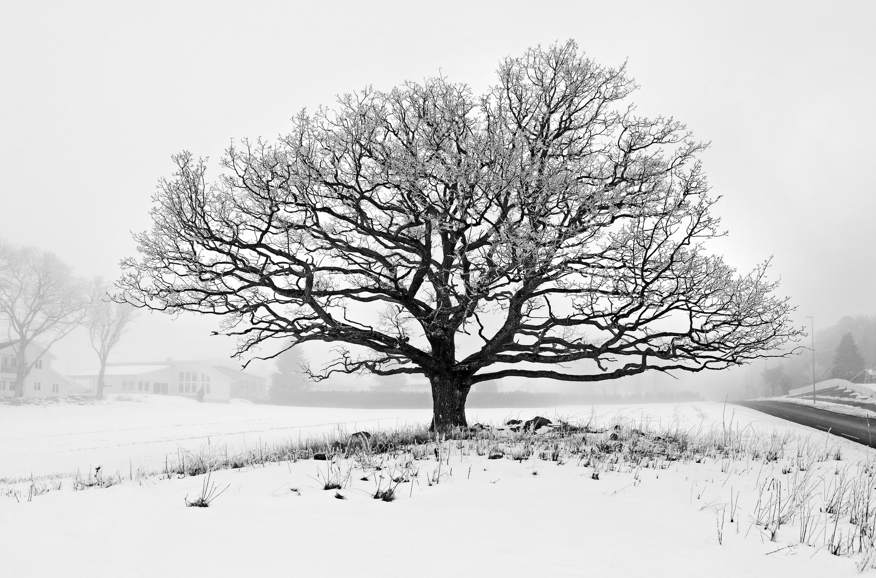 Winter Mist 3  # 1