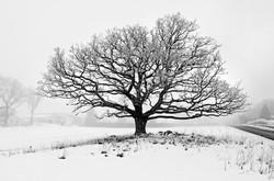 Winter Mist # 28