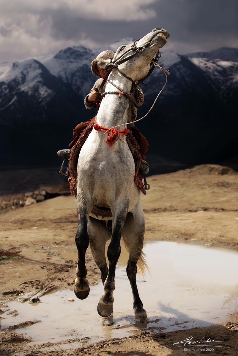 Wild Rider # 299