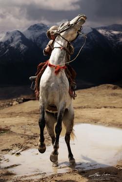 Wild Rider # 44
