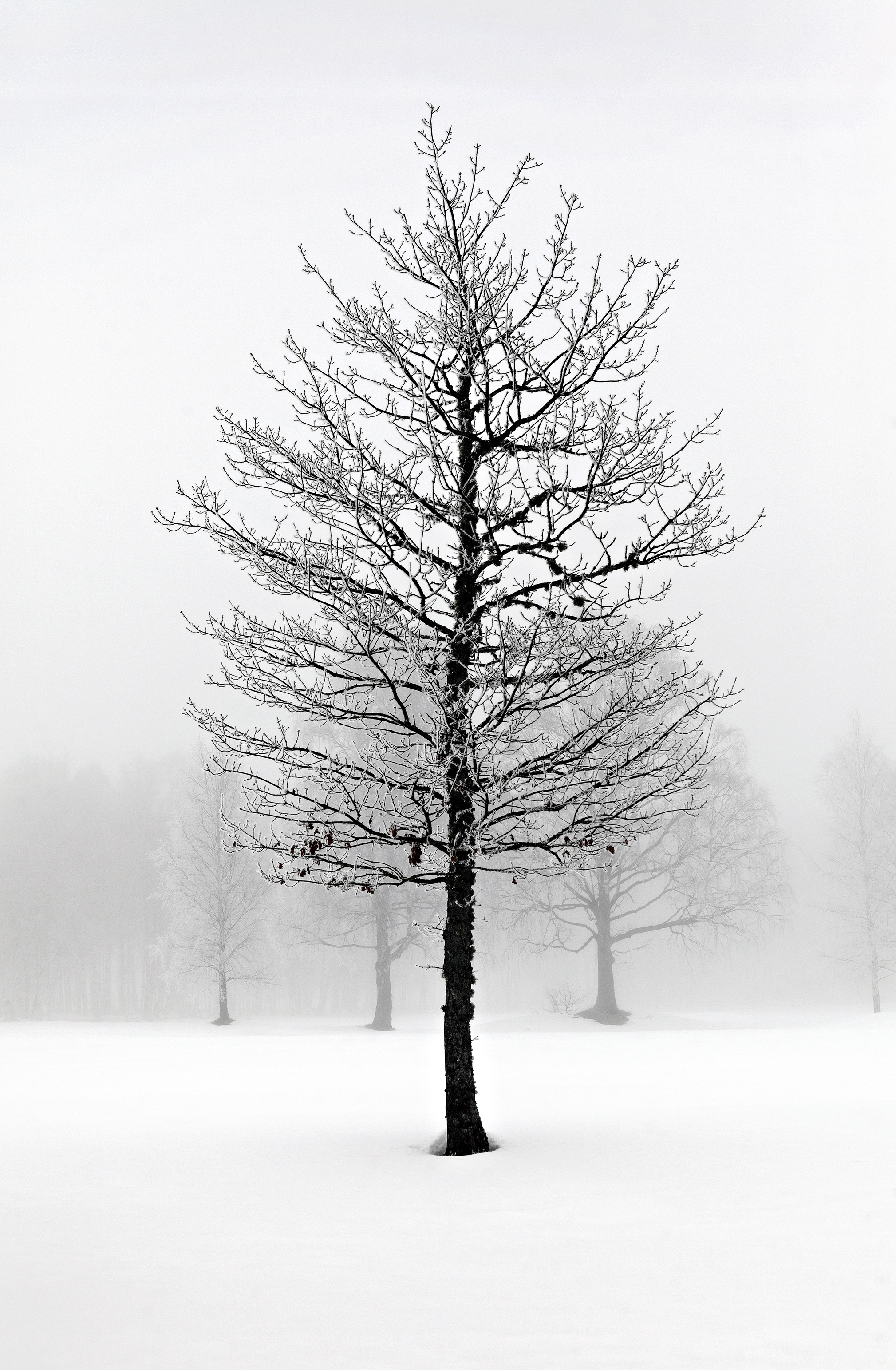 Winter Mist 1 # 2