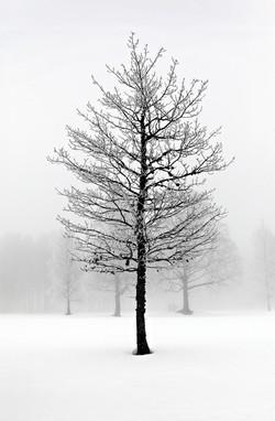 Solitude Tree # 27