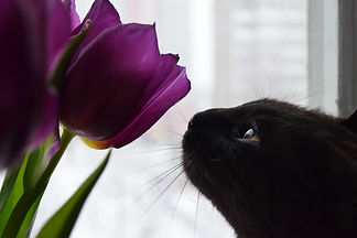 cats-4178451_1920.jpg