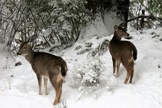 Deer Snow Direction Creative Walks.JPG