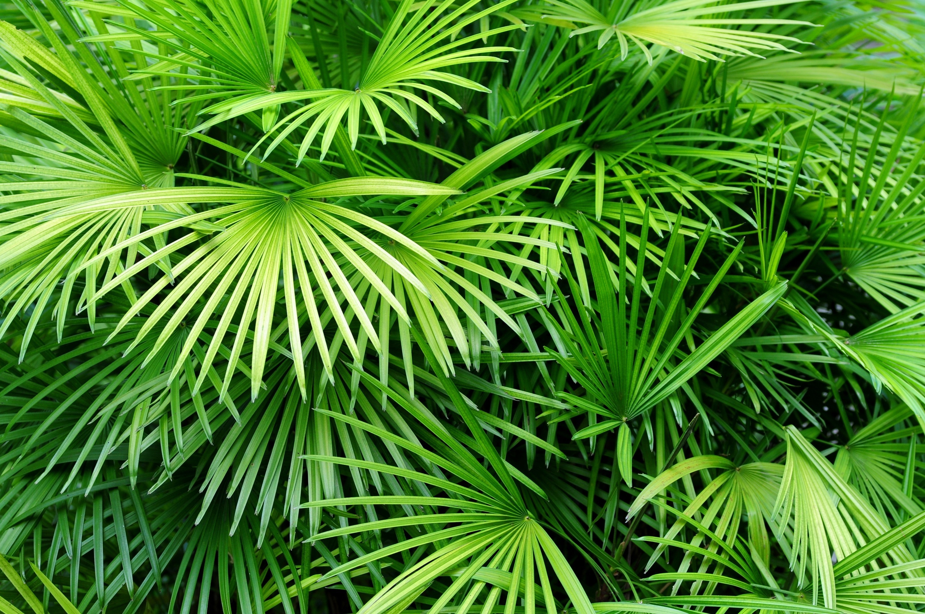 Luscious Palm Leaves