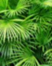 Luscious Palmblätter