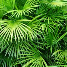 perfekt für Palmen