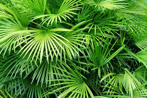 Luscious palmbladeren
