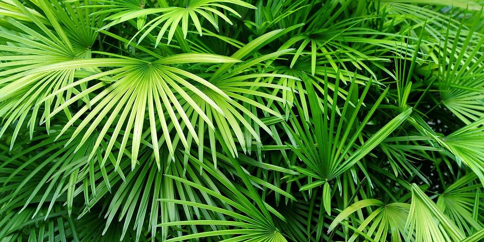 Palm Sunday & Brunch