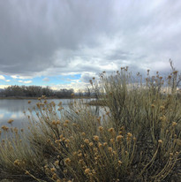 Arapaho Bend Natural Area