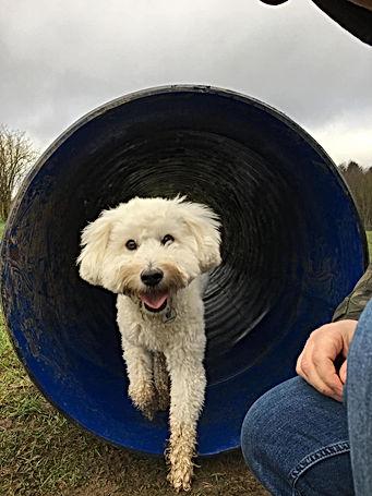 dog field.jpg