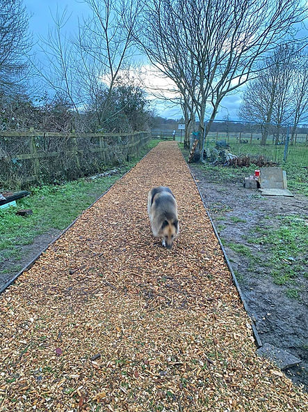 freedom dog field for hire send surrey