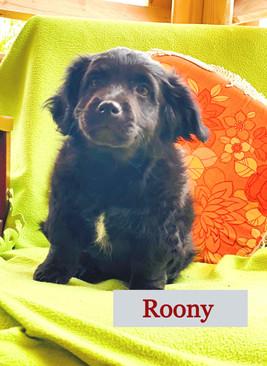 Roony