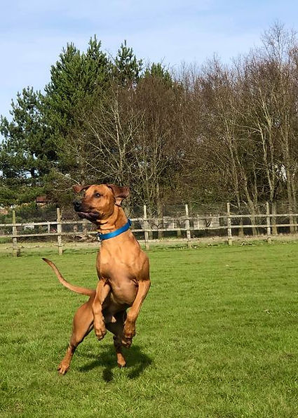 freedom dog field for hire in send surrey