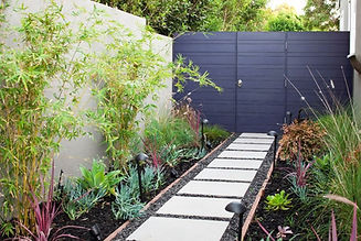 Clumping-bamboo-against-a-neutral-wall.j