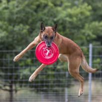 switch frisbee.jpeg