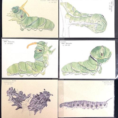 山田あき/イモムシポストカード6枚セット