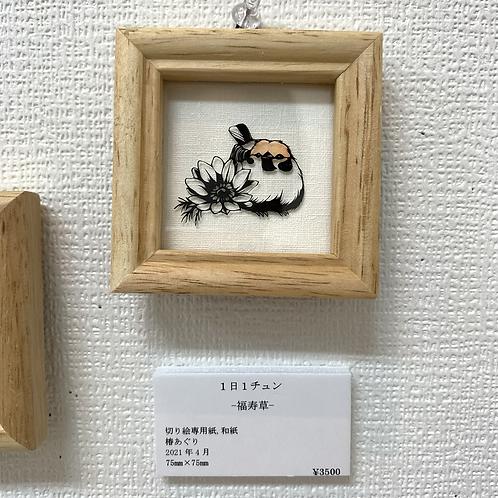 椿あぐり 作「1日1チュン/福寿草」