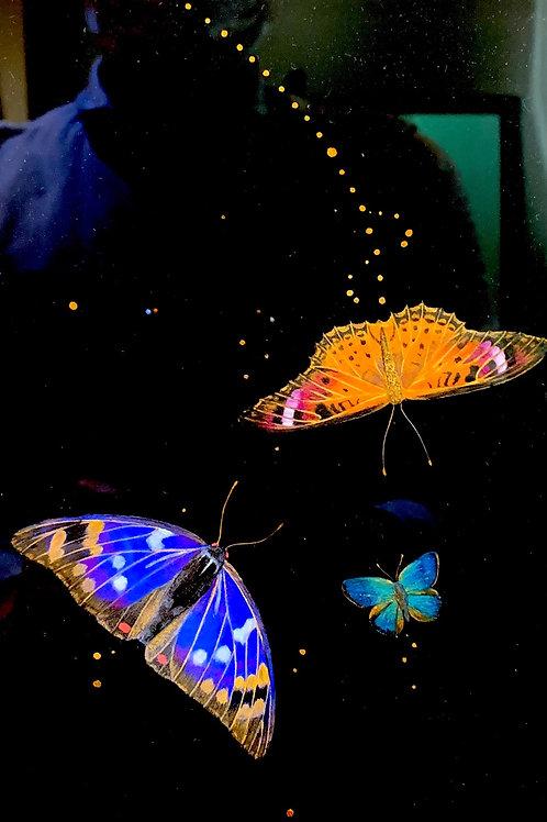 鳩羽杜森 作「宵闇の蝶」