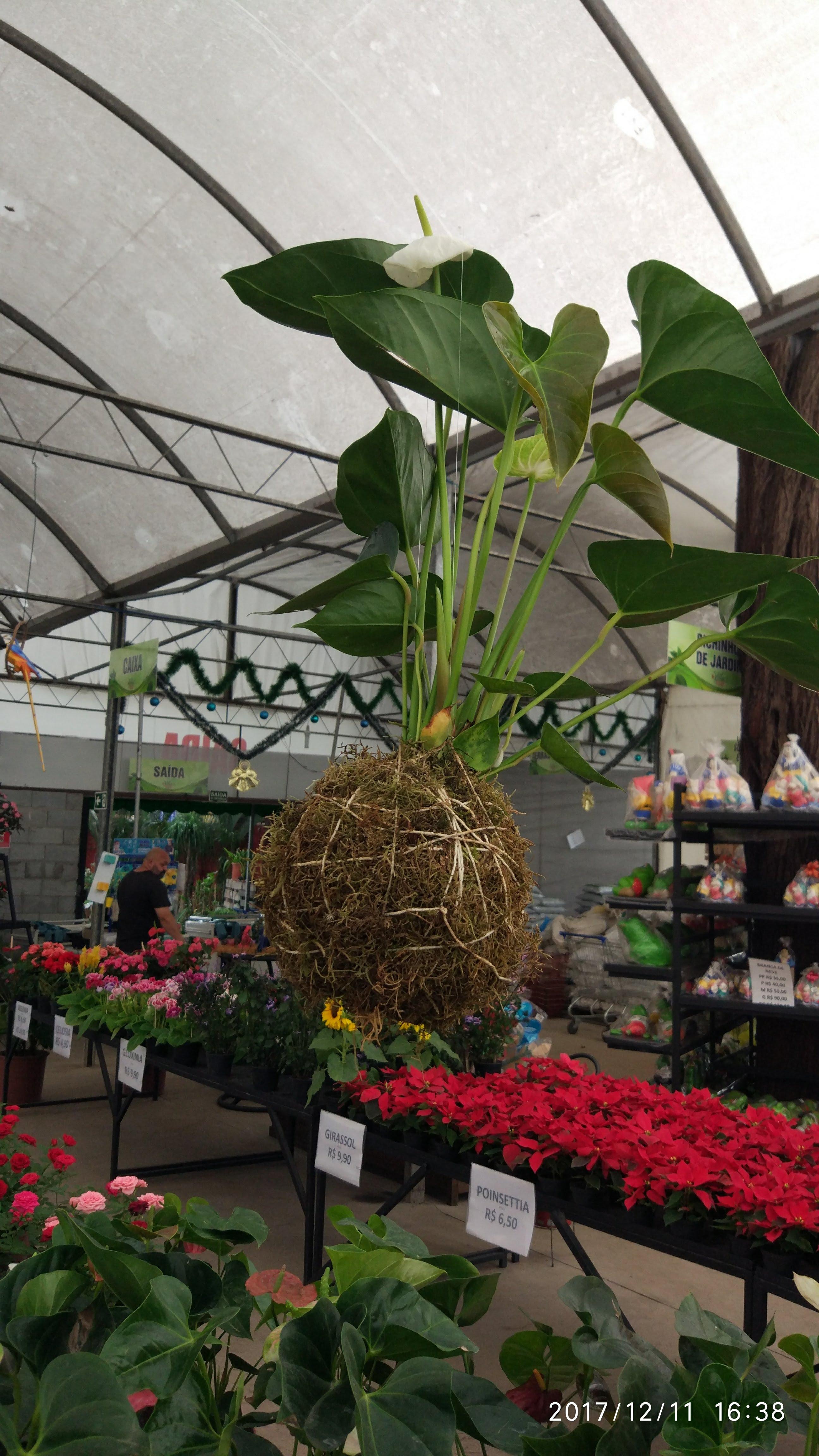 5b176ac64 GALERIA | villas garden flores vasos jardim mudas vila guilherme ...
