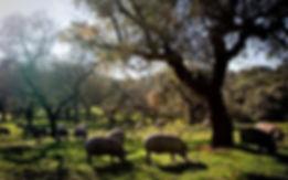 jambon-iberique-cebo-de-campo-pata-negra