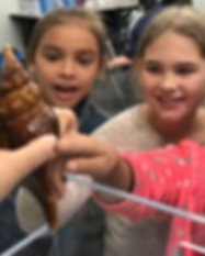 Children touching a live mollusk at Bailey-Matthews National Shell Museum on Sanibel Island Florida