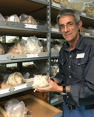 Dr. José H. Leal in the collections department at Bailey-Matthews National Shell Museum on Sanibel Island Florida