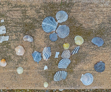Clam shells laid out on the shore