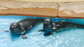 A day at the Natureland Seal Sanctuary
