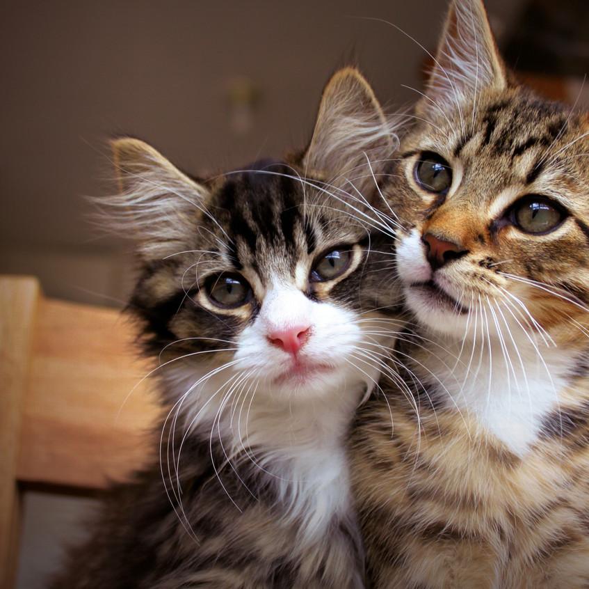 Main_cats