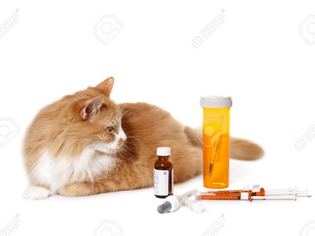 Keeping Cats Safe - Paracetamol Poisoning.