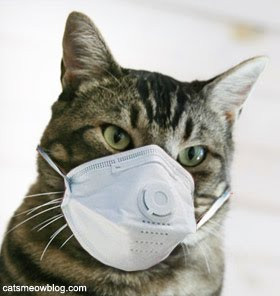 Keeping Cats Safe Campaign -Weedkillers - Protecting your garden but at your cat's risk?