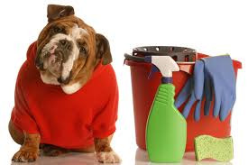Are Your Home Cleaning Products Harming Your Pet?