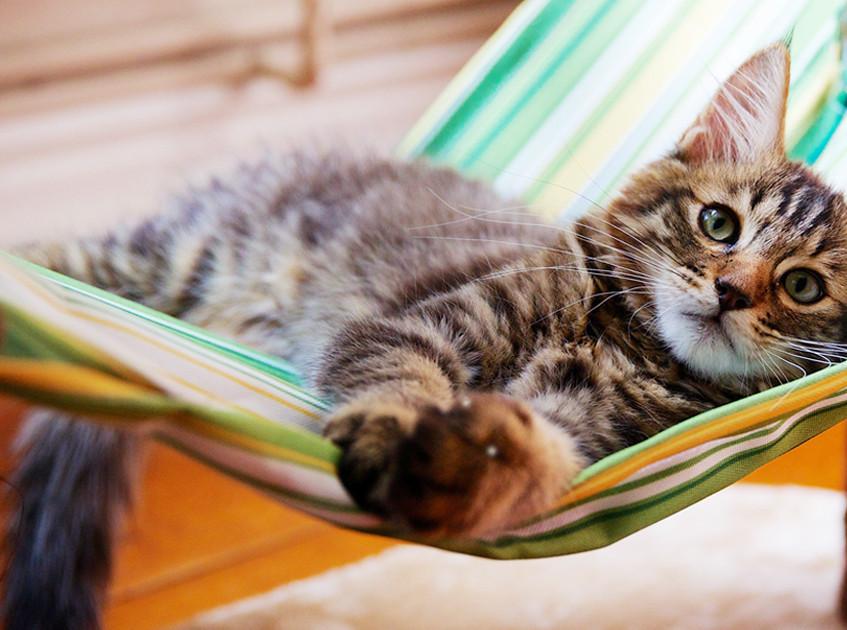 cat_hammock_01 (1)