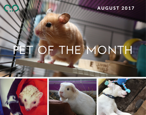 Pet of the Month - August