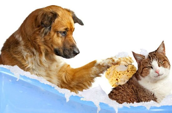 grooming-dogs-cats-550x364