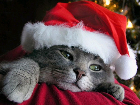 Keeping Cats Safe - How to keep your kitty safe at Christmas.