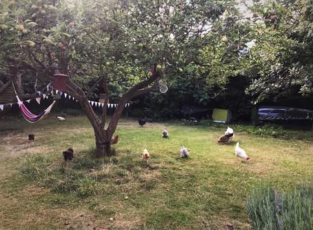 Urban Chicken Keeping by Hen Corner