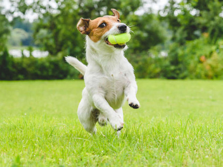 Terrorised turf? Top tips to dog-proof your garden