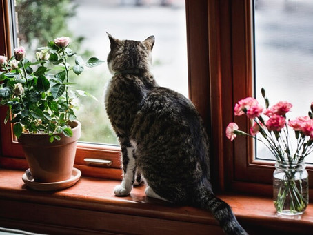 Keeping Cats Safe - 'High-rise syndrome' in cats: they don't always land on their feet