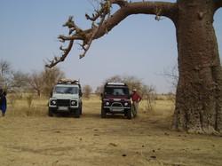 baobab vers kayes