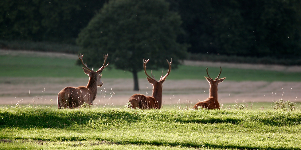 Richmond and Richmond Park - Pay What You Can Tour Sunday