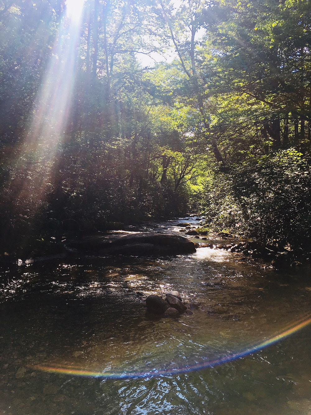 only 20 minutes from our Asheville luxury cabins