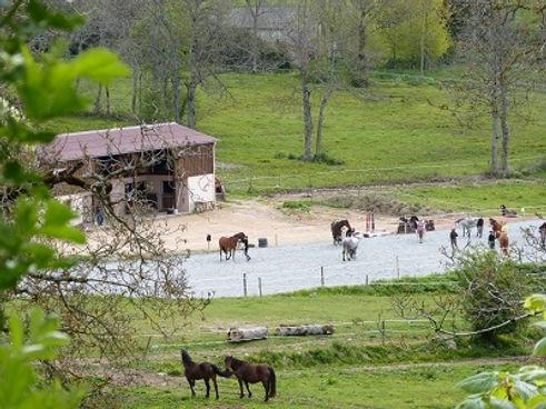 Haras des Allées Saint-Just-en-Chevalet