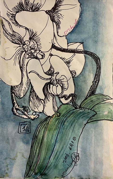 蘭花系列7