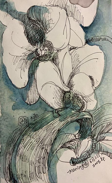 蘭花系列9