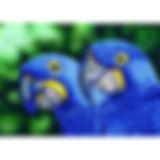 DD9.023 - Blue Hyacinth Macaws-700x700.j