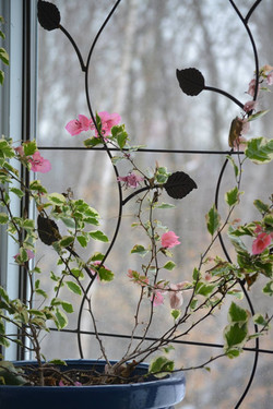 Ashby Bird Aviary Design-4