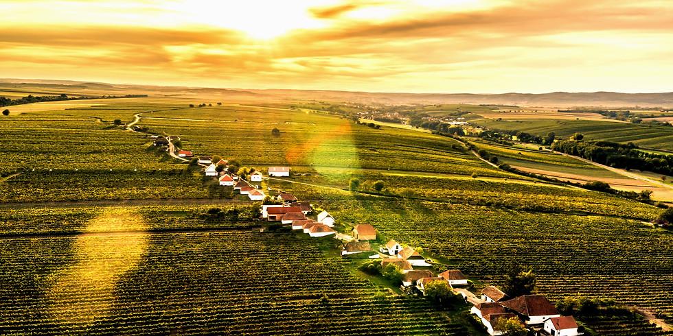 Weingartenwanderung am Manhartsberg